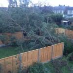 Catford Tree 2