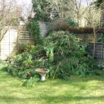 Tree removal in Hartley Kent